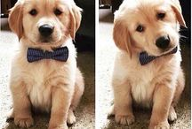 Furry Fashion / Literally just dogs wearing bow ties.