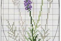 ramos flores p.cruz