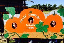 Pumpkin Season / 0