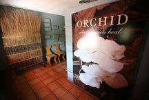 The Orchid Recovery Center