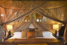 Dream tropical bedroom