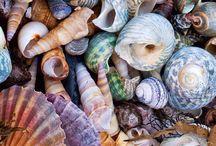 Kagylók