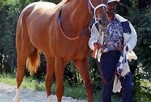 Cavalli famosi