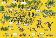 Potager | Jardinage