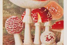 mushroom грибы pilze