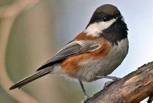 Birding in Southern Oregon / birds, birding / by Mail Tribune