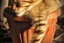 Koteły uprawne