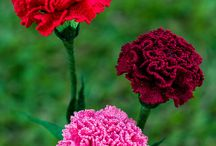 morsomt blomster