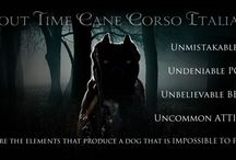 About Time Cane Corso