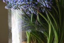 Weddings :: Pastellicious / by Angela's Bella Flora, Inc.