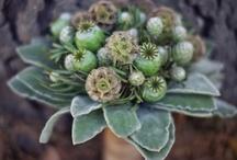 flowers / by Sara Kube