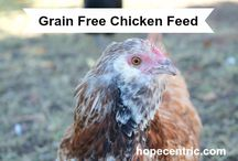 Homesteading: Chickens / by ecoMomical Me