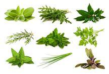 Hierbas Aromáticas y medicinales