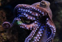 octopus photography