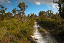 Bibbulmun Track Scenery / The Bibbulmun Track is one of the world's great long distance walk trails, stretching nearly 1000km from Kalamunda, a suburb in the hills on the outskirts of Perth, to the historic town of Albany on the south coast. It passes through the heart of the scenic south west of Western Australia