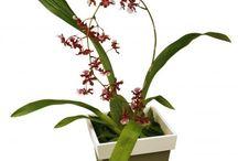 orquídeas e flores