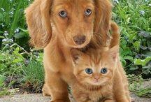 Jak pies z kotem......