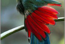 Vögel exotische