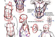 anatomy study : Torso