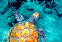 Beautiful Sea Creatures / Sea Creatures