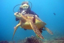 Scuba Diving Oahu / Some cool pictures from different places on Oahu to scuba dive.