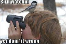 funnny bird pictures