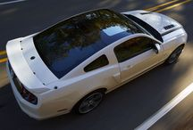 Obsession: Mustangs