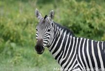 [ TRAVEL ] Africa / My Trip to Kenya & Tanzania
