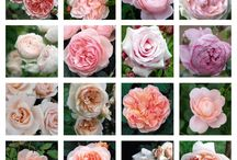 Flowers / An amazing gift of nature. Absolutely beautiful / by sasha perera