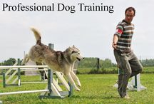 Professional Dog Training / We believe in the value of dog training and behaviour consulting to society, because in our minds, to love a dog is to love the dog's trainer.