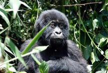 Uganda: Let's go trek the gorilla's