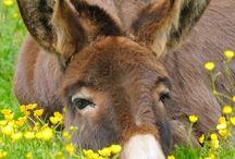 0 Donkey