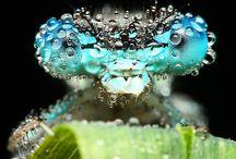 Insectes / La nature... sous tous les angles !