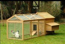 Κοτοχωριό / Διαφορετικές ράτσες από κότες κατοικούν και φιλοξενούνται σε ιδιαίτερα κοτόσπιτα. Κάθε οικογένεια ξεχωριστή και ιδιαίτερη. Έντονα και ποικίλα χρώματα, διαφορετικά μεγέθη, μαγεύουν τον οποιοδήποτε επισκέπτη, που έχει τη δυνατότητα να τις παρατηρήσει στο δικό τους κοτοχωριό.