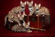 Future Pet!!
