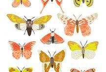 Vlinders en torretjes