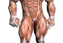 Anatomophysiology