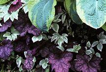 Garden - kasveja joista valita omaan pihaan