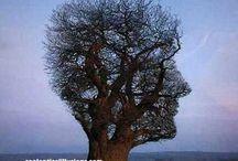 Prírodné výtvory