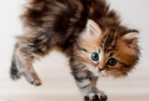 Anilmals so cute! / by Robbin Crider