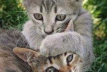 cats / cats, kittens, cute