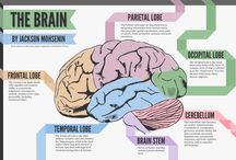 All about the brain
