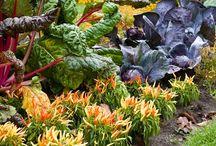 Project Edible Garden