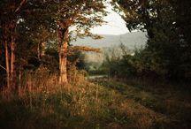 spring / by Teal Baskerville