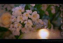 Video clips of Renaissance Floral Design's work / by Renaissance Floral Design