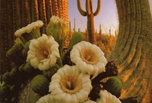 cactus / by Catherine