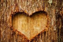 Hjerte /Heart