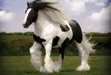 Horses / Behold such magnificent creatures!