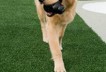 Cute K9Grass Pups