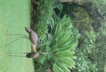 My friend's garden / A garden created with much love and passion by my friend Ermine Flemix in Komatipoort,South Africa!